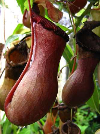 12 of the World's Most Gigantic Plants