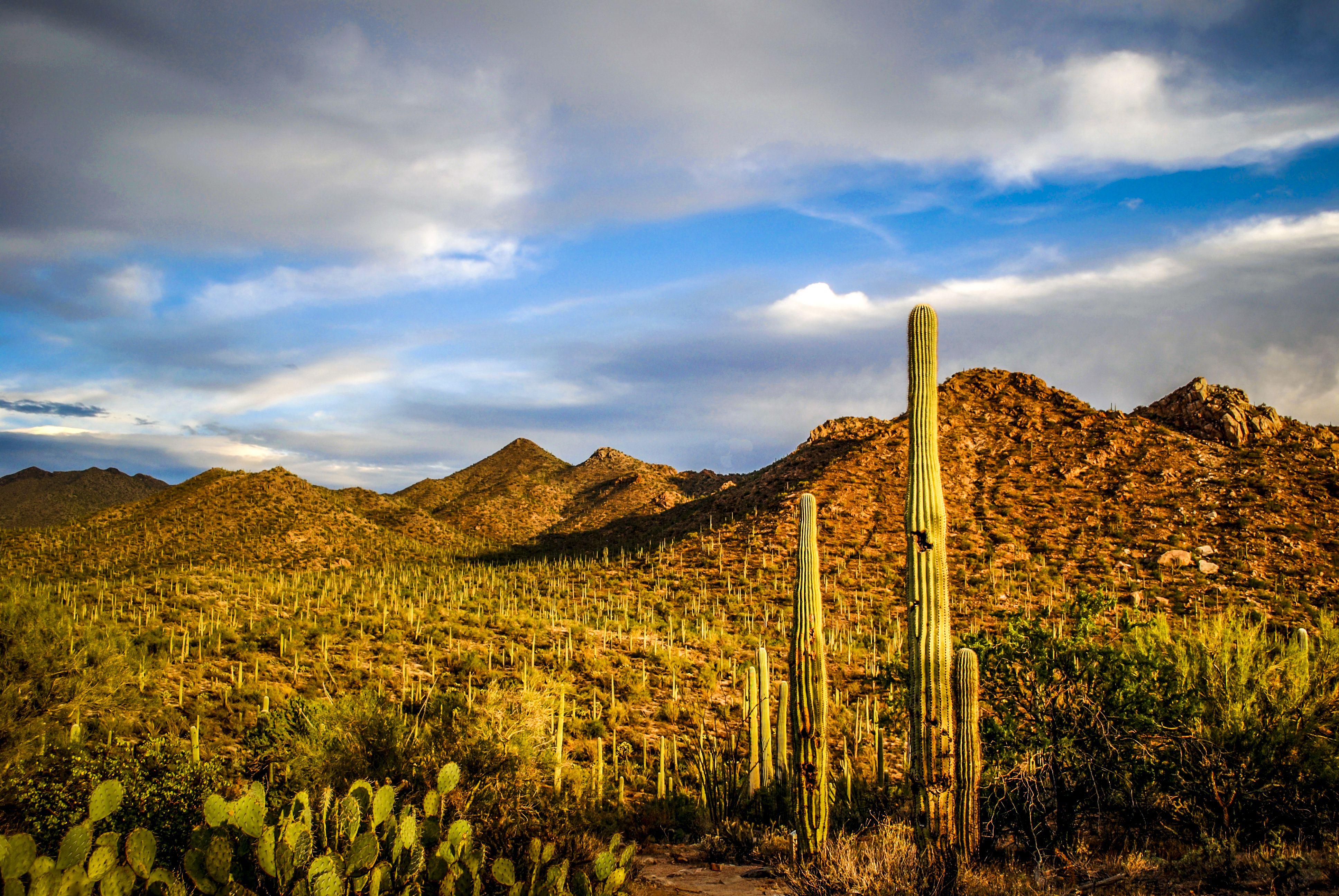 Free Activities To Do In Tucson Arizona