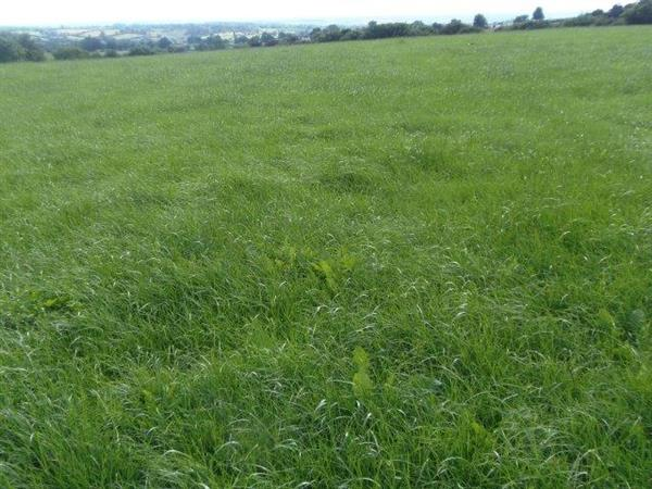 13 acres, Situated adjoining Balaams Lane, Spot Acre ...