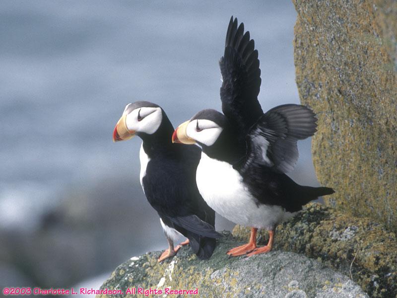 Walrus Island Birds