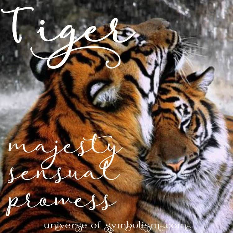 Tiger Symbolism   Meaning   Tiger Spirit   Totem Animal Messenger Tiger Spirit  Totem   Power Animal   Symbolism and Meaning