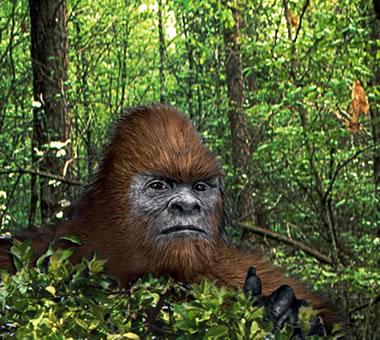 Alleged Bigfoot Photo