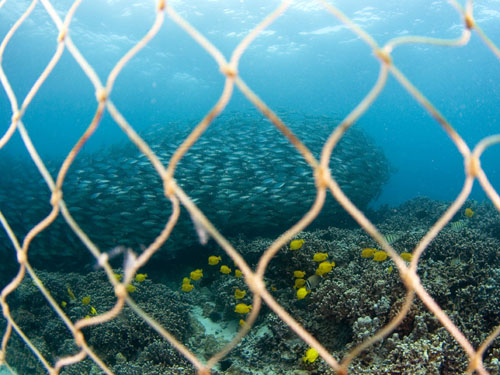 Coral Reef In Kona Hawaii Damaged While Trying To Catch
