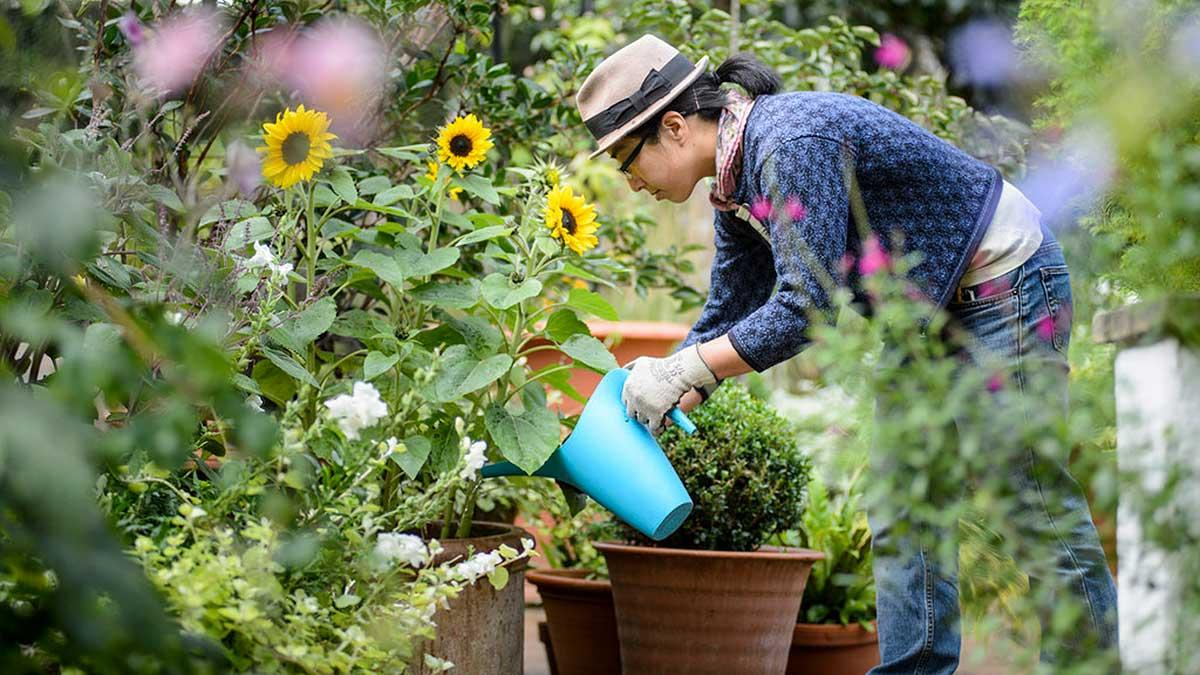 Beth Otway's Gardening Hints and Tips – VantagePoint Magazine