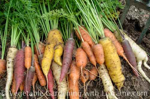 What Plant Together Raised Vegetable Garden