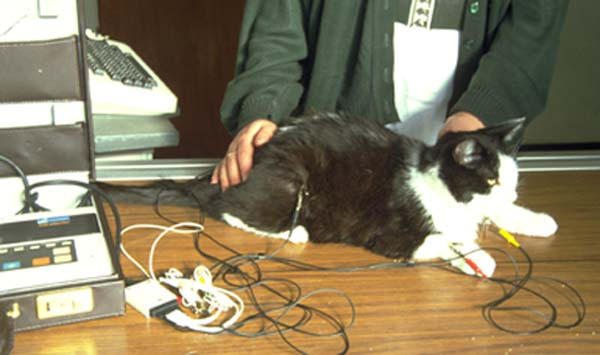 Ecg Overview Cats Vetlexicon Felis From Vetstream