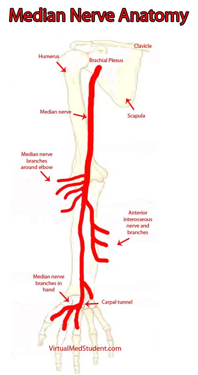 Posterior Interosseous Nerve Palsy Treatment