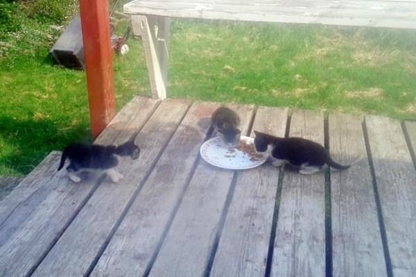 free cat sudbury ontario # 8