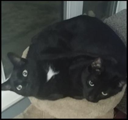 free cat sudbury ontario # 66