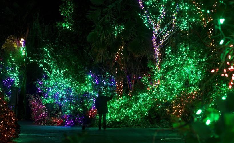 Zoo Lights Woodland Park