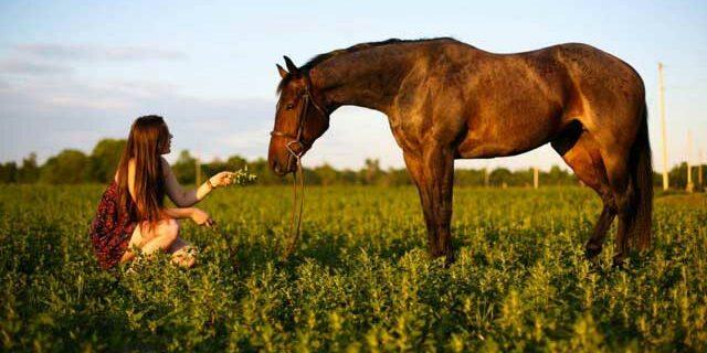 Walden Ridge Equestrian Centre Best Equestrian Centre In