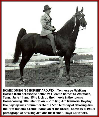 Tennessee Walking horse - Strolling Jim #410315 home page ...