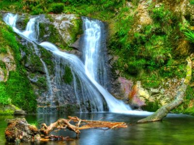 Forest Waterfall Desktop Background 597823 : Wallpapers13.com