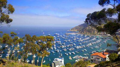 Resting On Santa Catalina Island, California ...