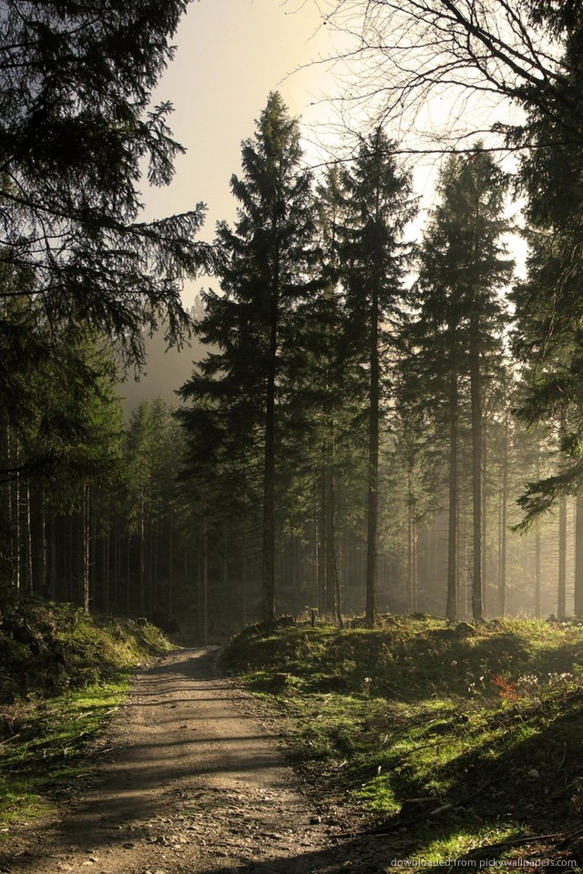 Download Iphone Wallpaper Forest Gallery