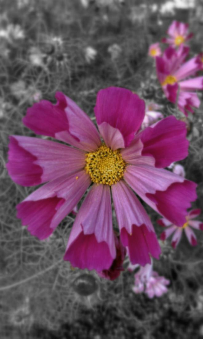 Tall Garden Flowers