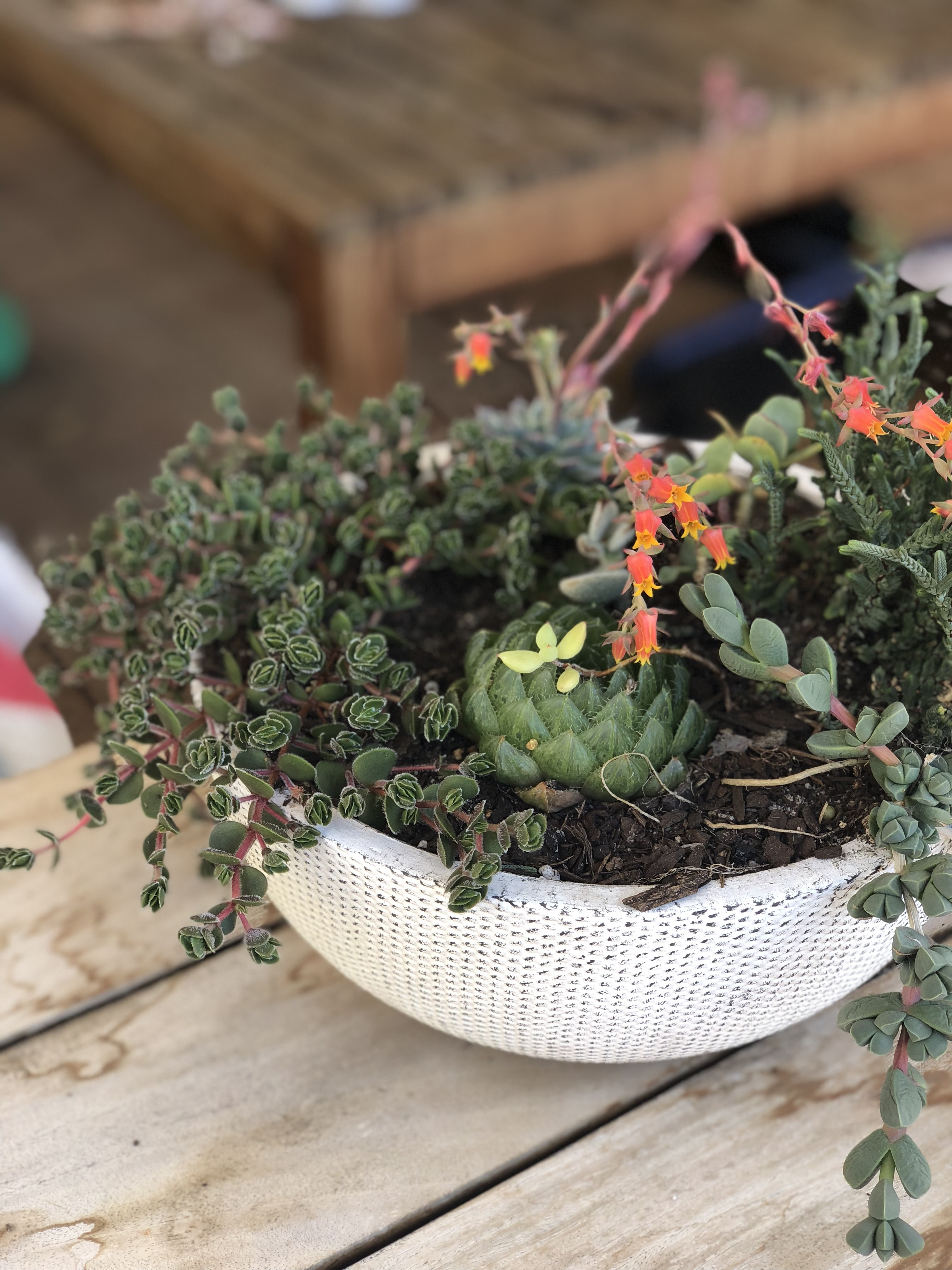 Selling Succulents Online