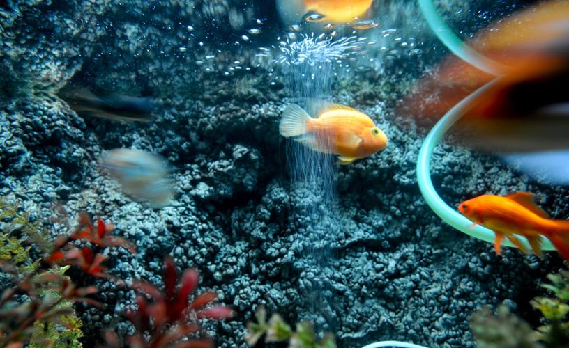 Blue Led Aquarium Light
