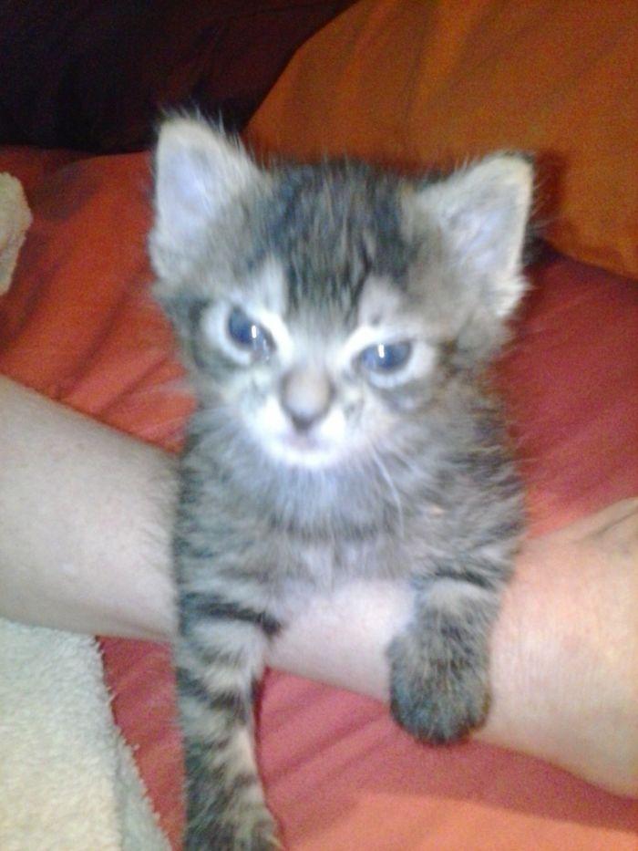 angry wet kitten - 700×933