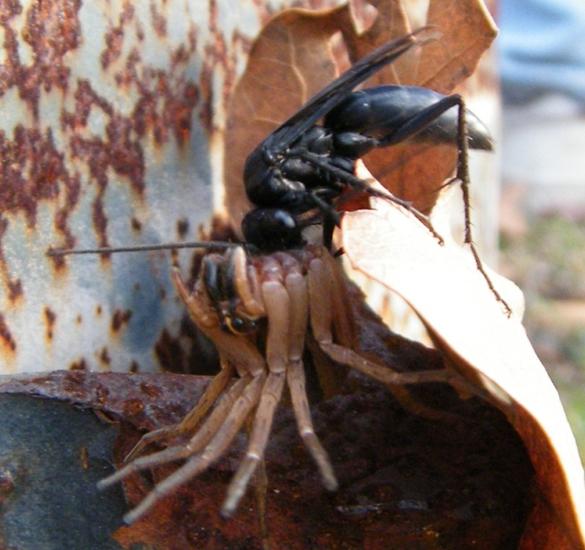 Orange And Black Ant Bug