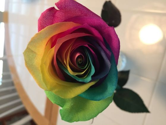 9 Easy Ways to Make a Rainbow Rose  with Pictures  Uploaded 2 years ago