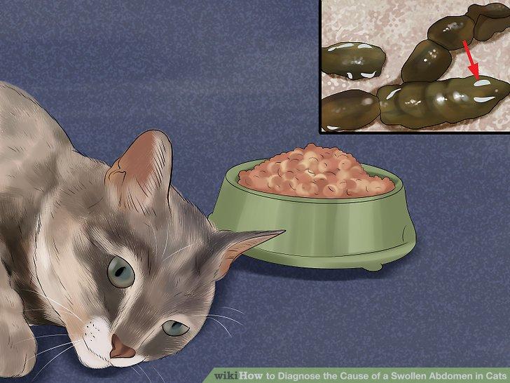 Identify Intestinal Worms Cats