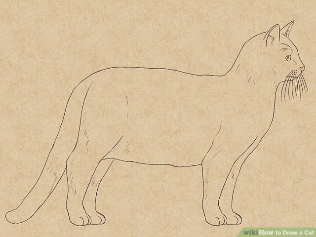 The 4 Best Ways to Draw a Cat   wikiHow Image titled Draw a Cat Step 28