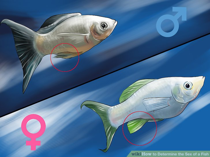 Determining Species Fish Guild