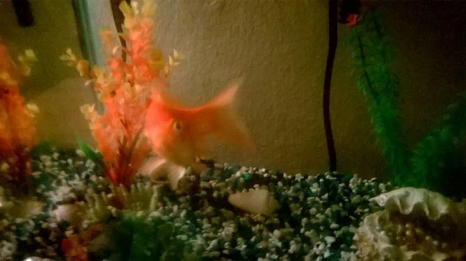 Aquarium Decorations Set