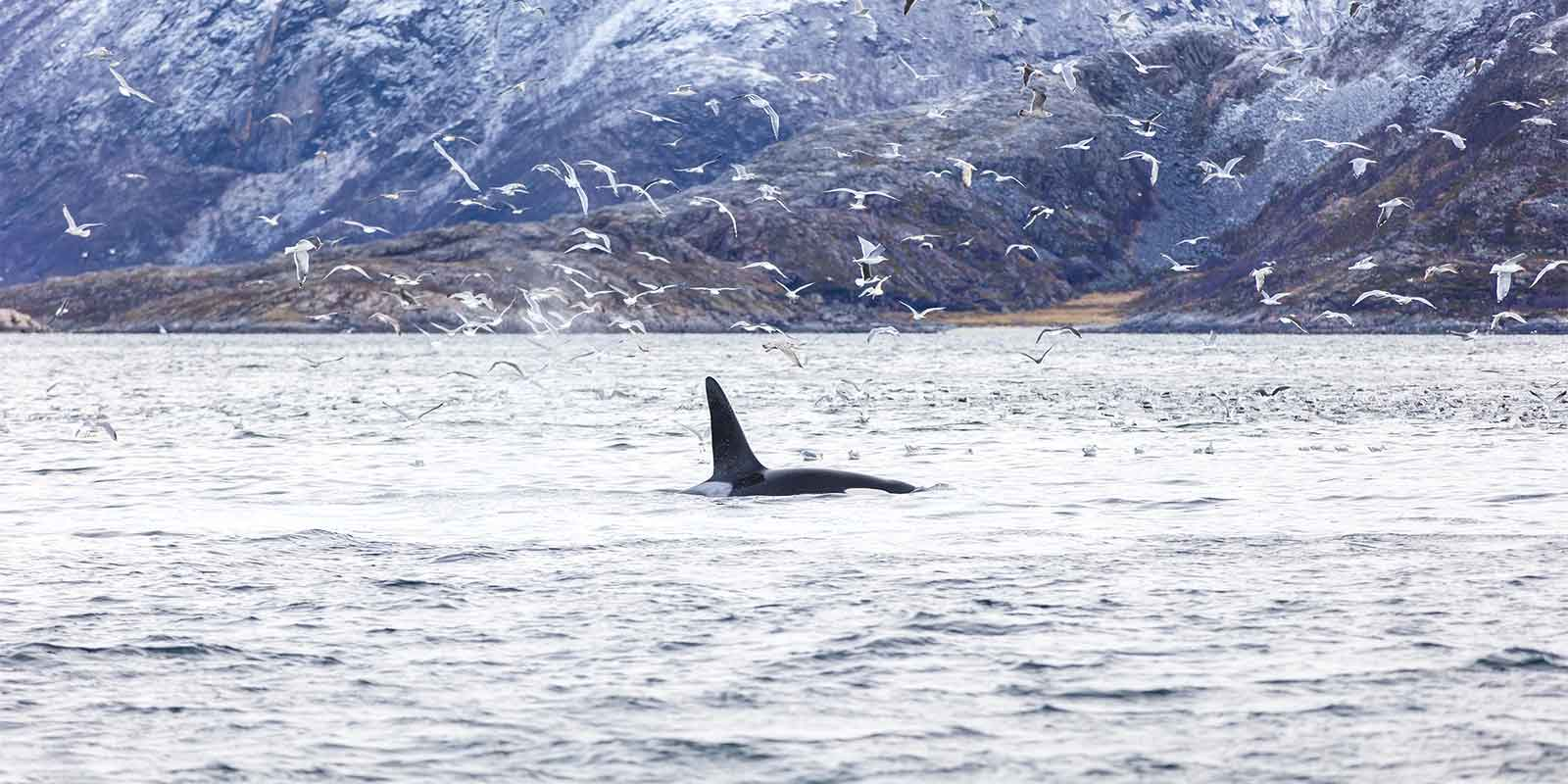 Northern Lights And Whale Watching Holidays Norway