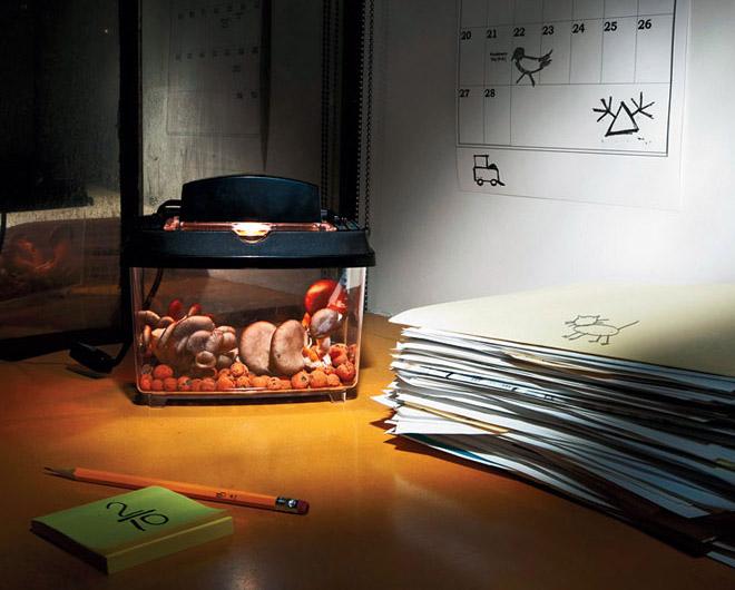 Mini Hydroponic Grow Box