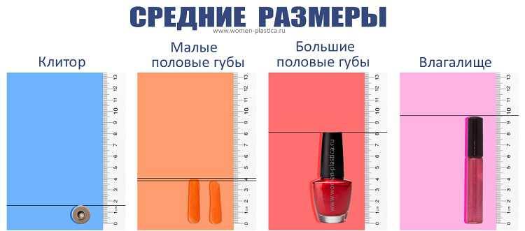Таблица сравнения размеров половых органов у женщин