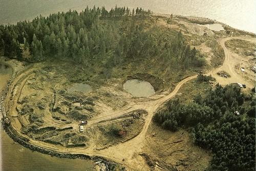 Oak Mystery Tree Island