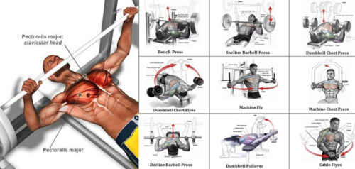 Best Outer Bicep Exercise