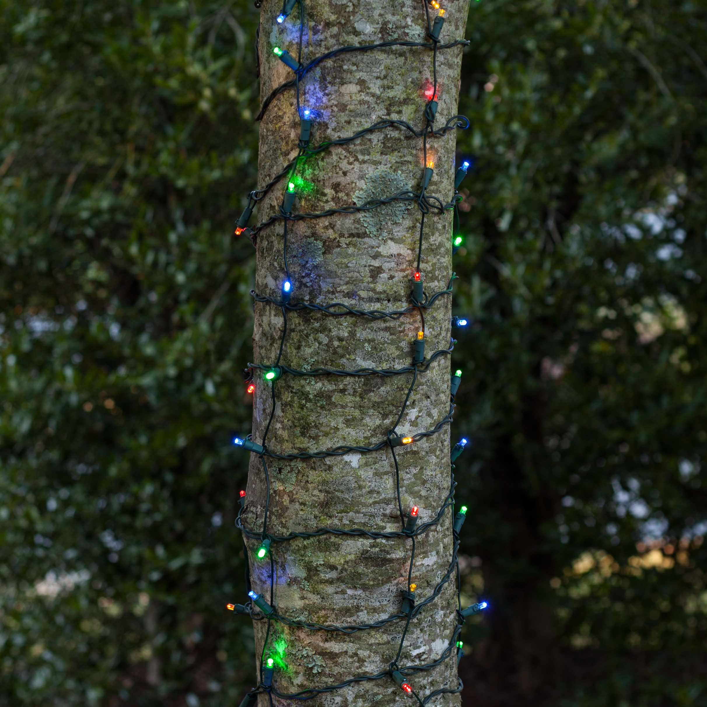 Led Trunk Wrap Lights 2 X 6 Multicolor Green Wire