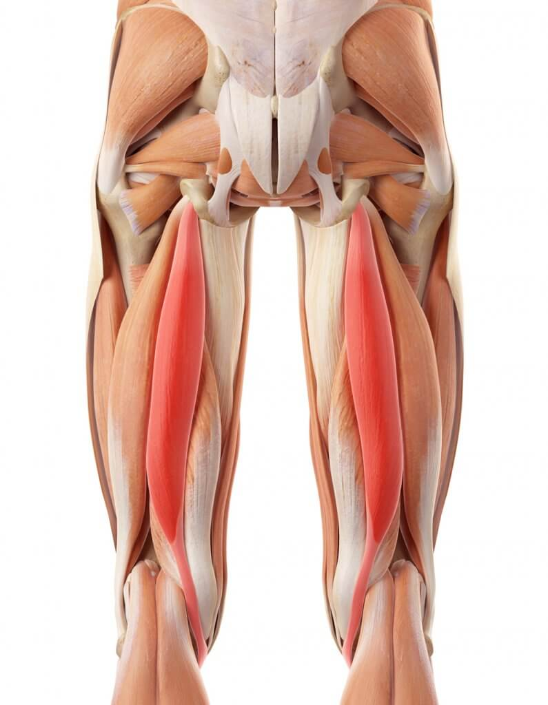Human Leg Tendons And Ligaments