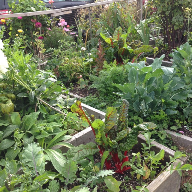 Vegetable Garden Box Ideas