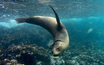 Galapagos Tour for Solo Travelers: Island Hopping & Cruise ...