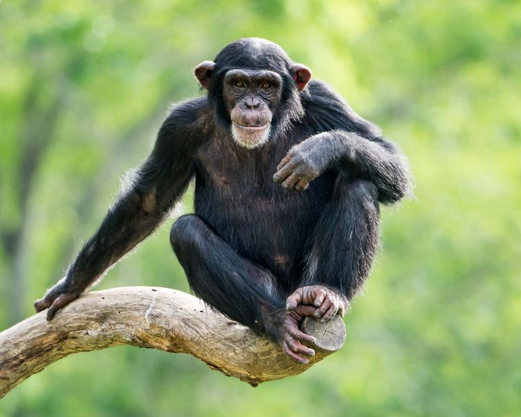 Best Of Rwanda Tour Gorilla Trekking Chimpanzees