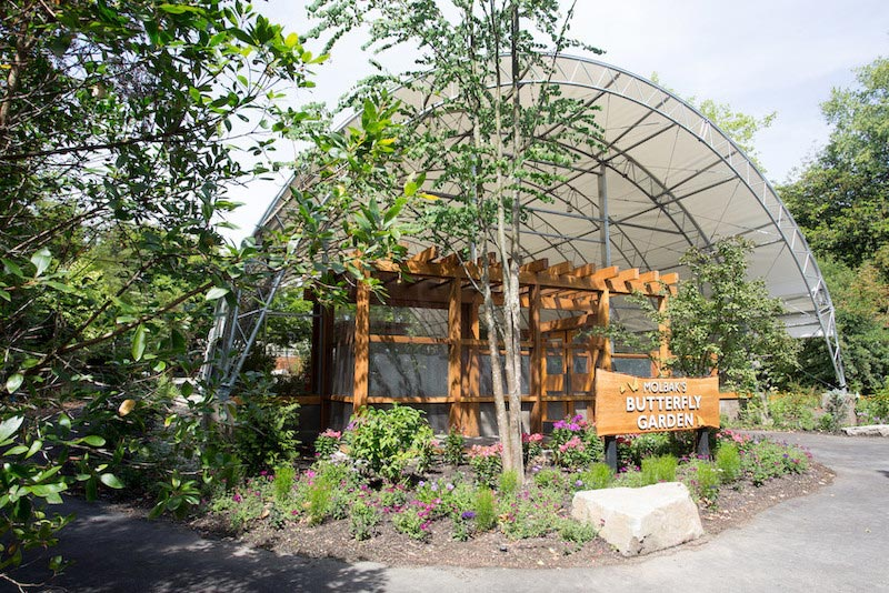 Woodland Park Zoo Butterfly Exhibit