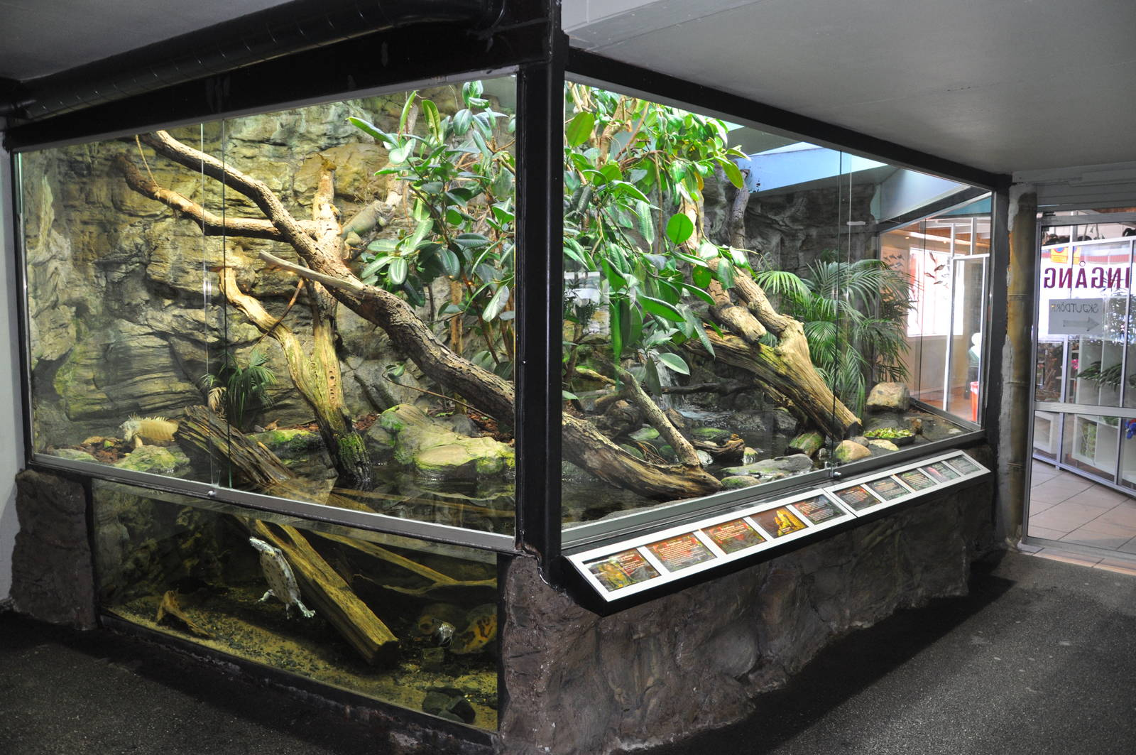 Large Iguana Terrariums