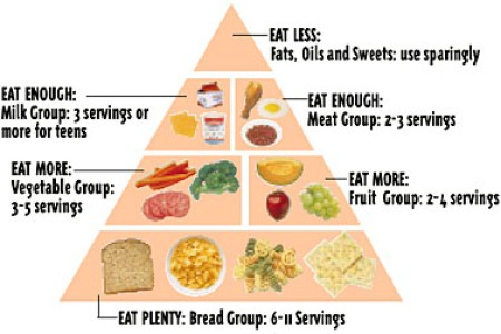 of the new food pyramid food guide pyramid there are six food groups in the pyramid breads cereal rice pasta vegetables fruits milk yogurt cheese meat