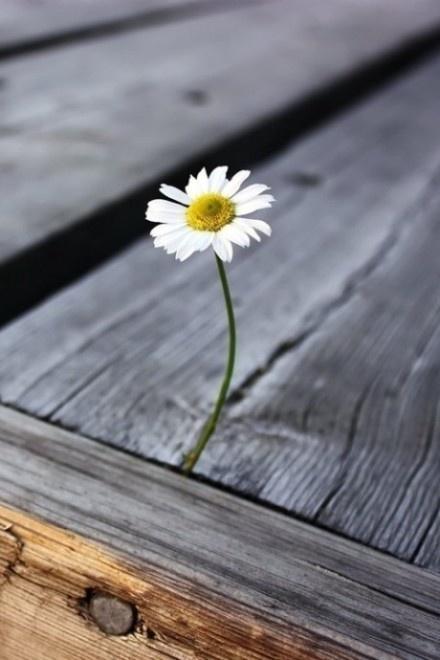 晚安心语170905:让一个人快速成长,就是让他遭遇一场爱情
