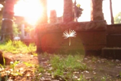 早安心语171027:友谊要像爱情才温暖人心,爱情要像友谊才牢不可破