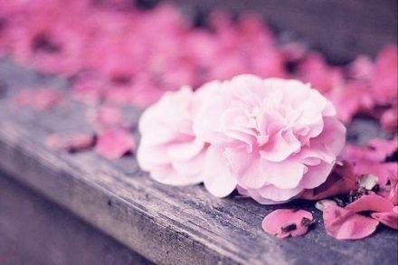 早安心语171212:你为谁笑眷如花,我为谁浮伤年华