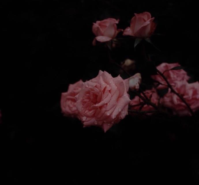 晚安心语情话180322:我心曾是一座孤岛寸草不生,你来之后花木繁盛