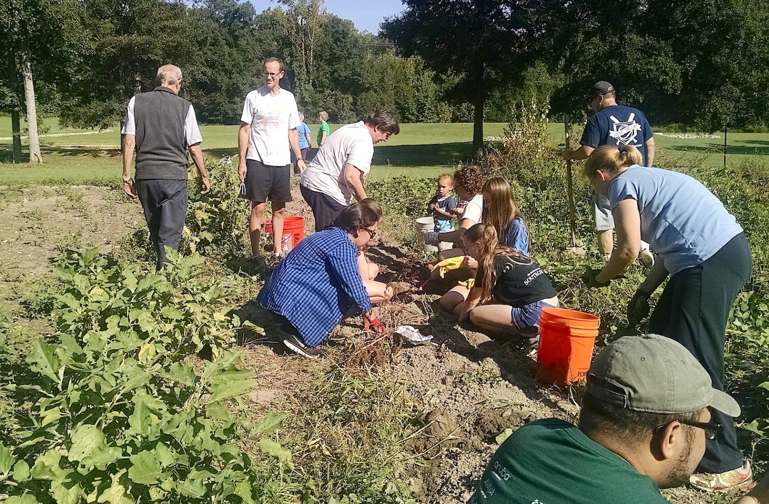 Fresh veggies bring people together at Synergy Garden in ...