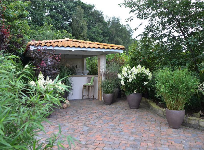 Garten und Terrasse - XXL Pflanzen