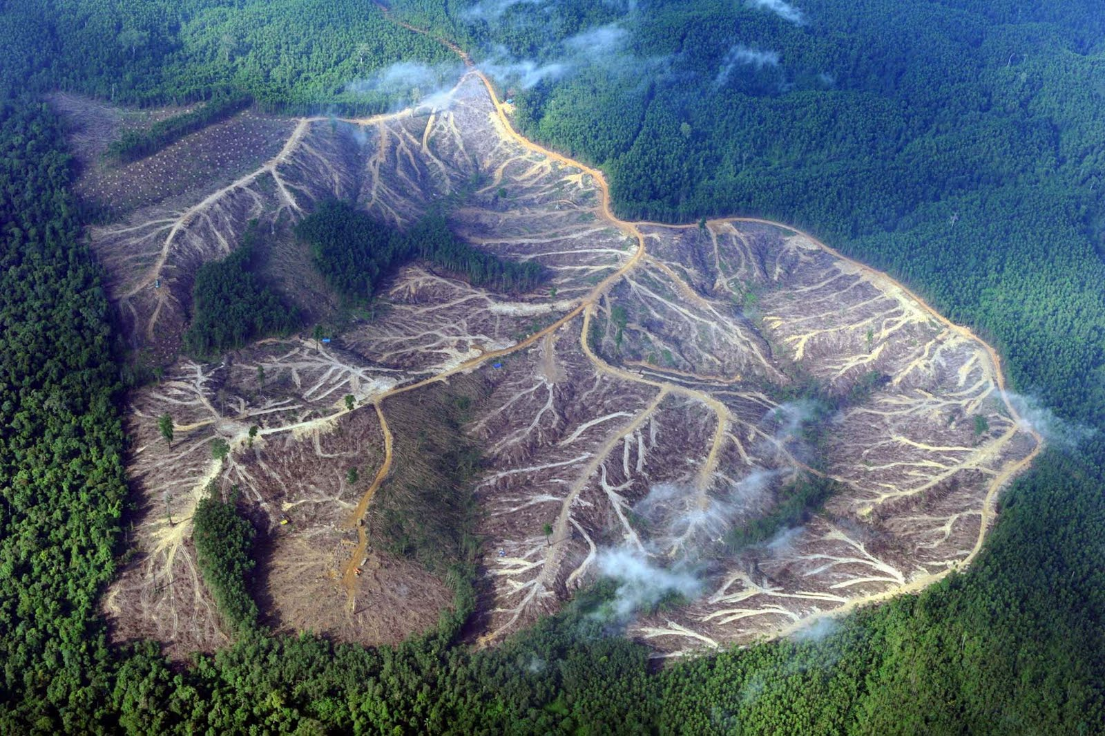 amazon rainforest deforestation - HD1600×1065