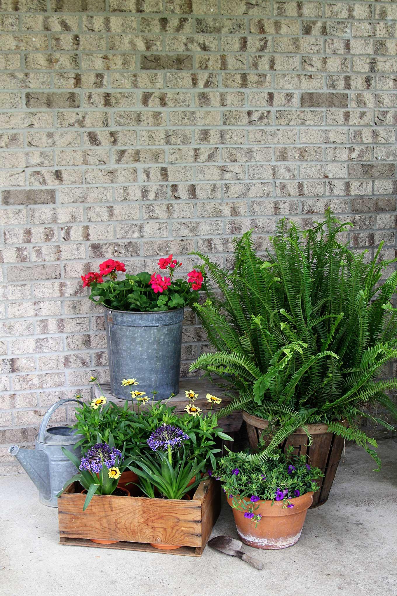 Pinterest Lavender Pot